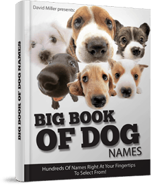 Big Book Of Dog Names